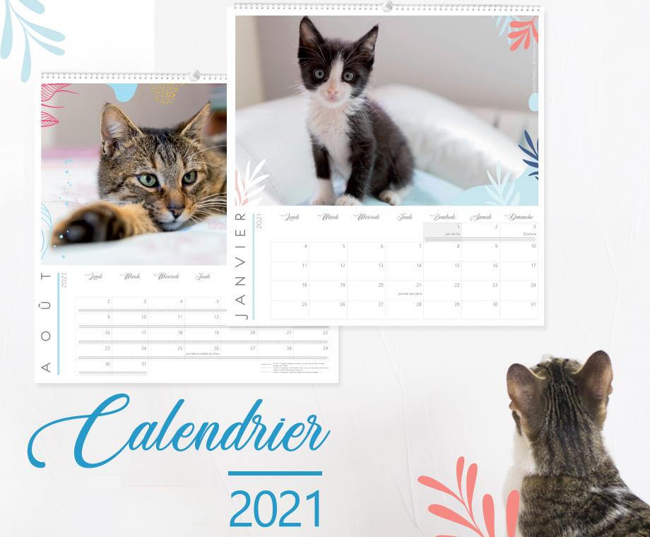 Calendrier 2021   Version chat   Les Petits Vagabonds